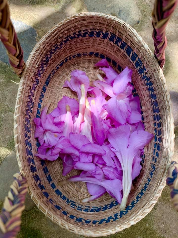 Basket of Ajo Sacha flowers by Aubrey Bambad